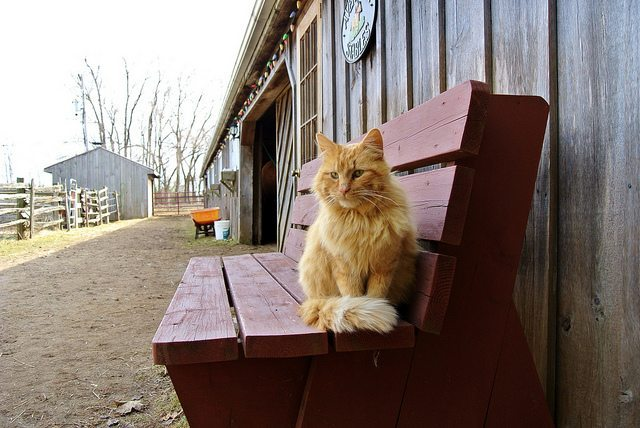 cat sitting on farm bench
