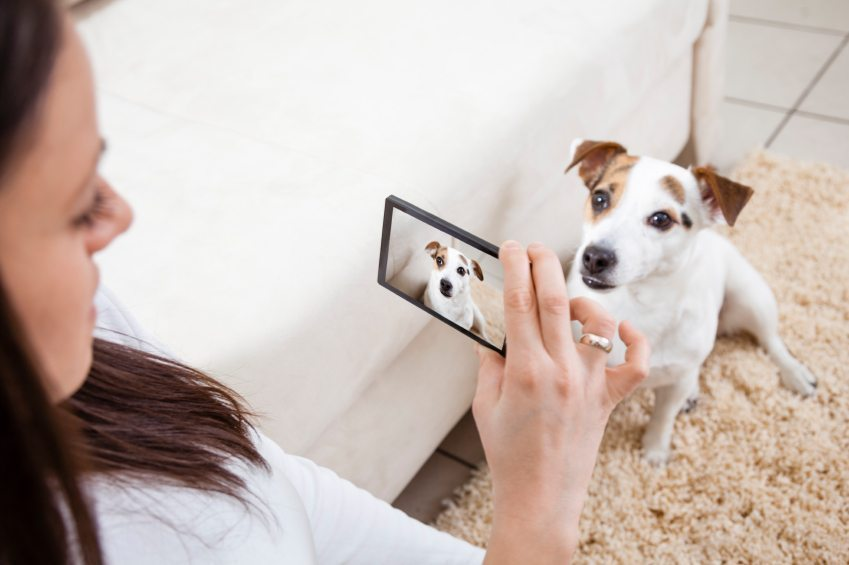 pet smartphone apps, dog iphone apps, cat iphone apps,