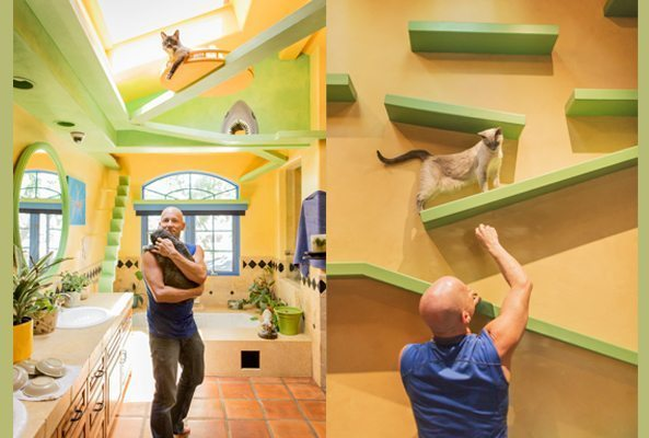 jackson galaxy, cat superhighway, catisfy to satisfy