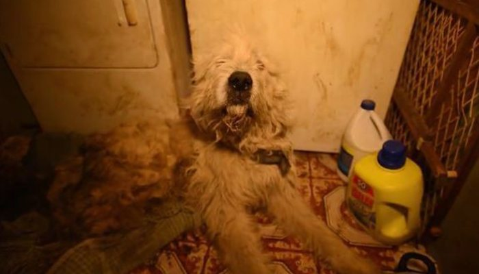 Adopting A Rescue Dog From Puppy Mill