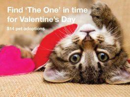 pet adoptions, lifeline animal project, fulton county animal shelter, dekalb county animal shelter