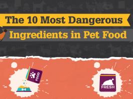 bad dog food ingredients
