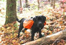 dog backpack reviews, ruffwear approach pack