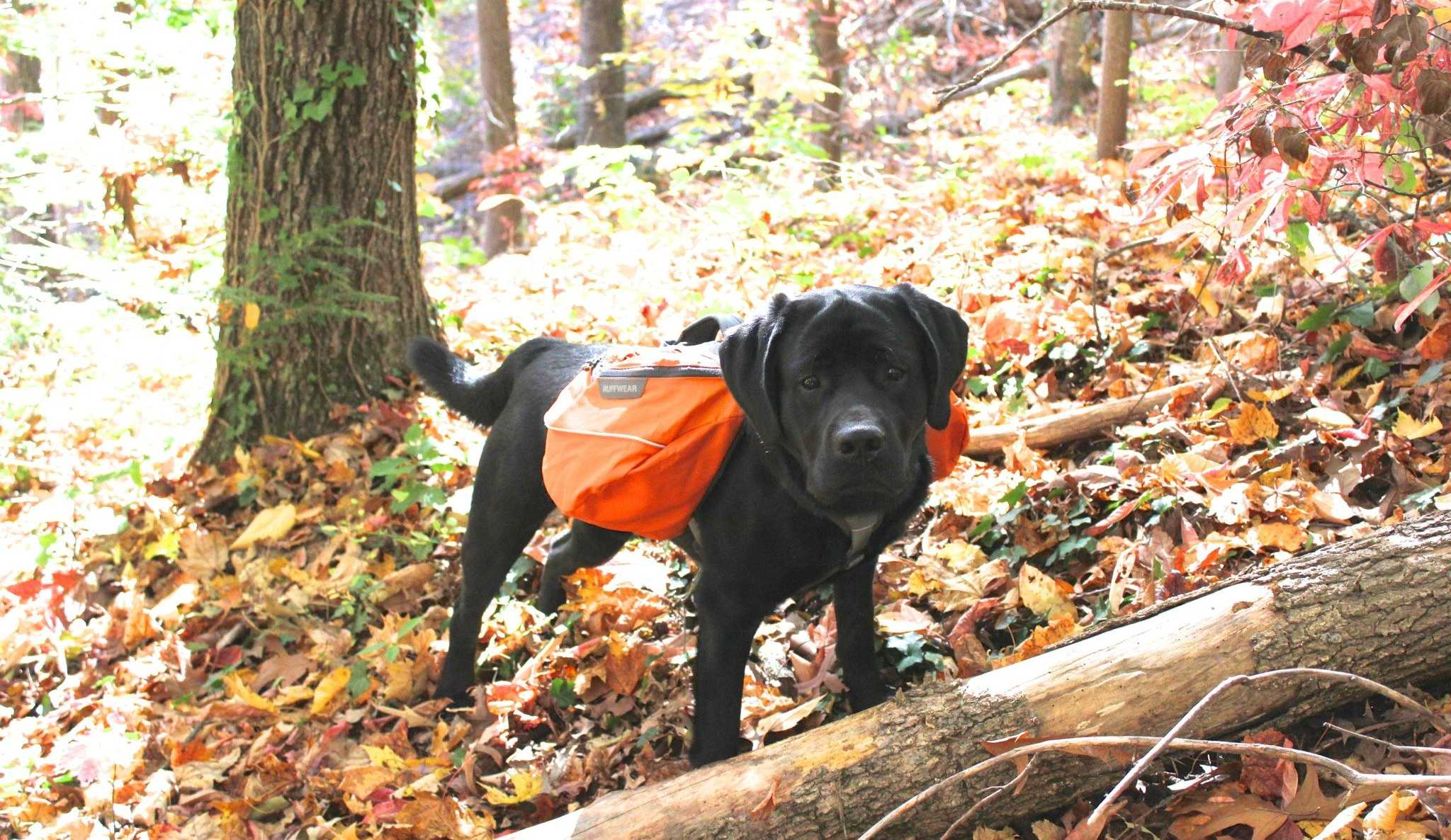 Dog Backpack Review - Hiking With the Ruffwear Approach Pack f77e6ae502864