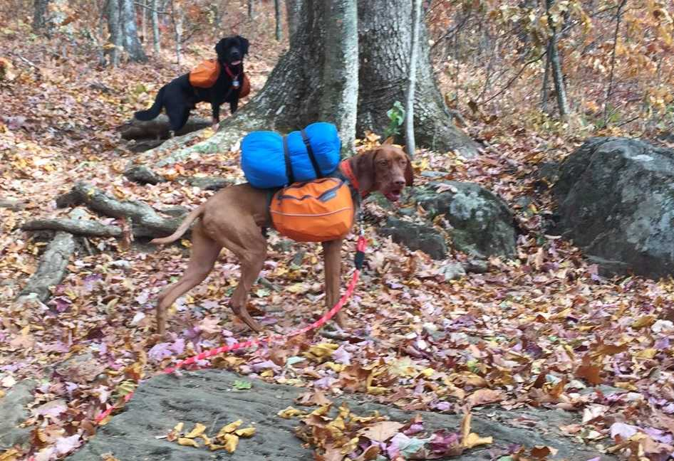 Dog Backpack Review - Hiking With the Ruffwear Approach Pack